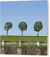 Symmetric Trees Over Old Fence Wood Print