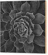 Symmetrical Succulent Wood Print