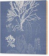 Symphocladia Gracilis  Wood Print by Aged Pixel