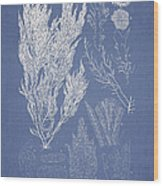 Symphocladia Linearis Wood Print