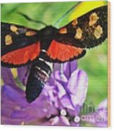 Symphony Of Colors Wood Print