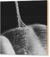 Synapse, Sem Wood Print
