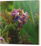 Synchlora Aerata Caterpillar 2 Wood Print