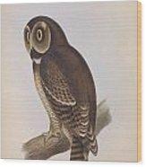 Syrnium Owl Wood Print