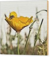 Syrphid Fly And Poppy 2 Wood Print