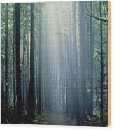 T. Bonderud Path Through Trees In Mist Wood Print by First Light