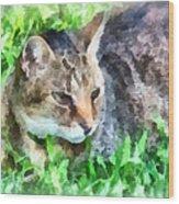 Tabby Cat Closeup Wood Print