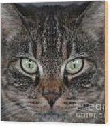 Tabby Cat Face Wood Print