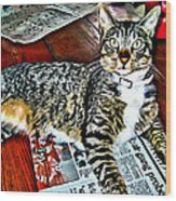 Tabby Cat On Newspaper - Catching Up On The News Wood Print