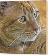 Tabby Cat Portrait Wood Print