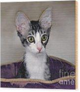 Tabby Kitten In A Purple Bed Wood Print