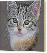 Tabby  Kitten An Original Painting For Sale Wood Print