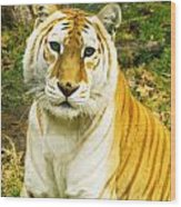Tabby Tiger I Wood Print