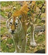 Tabby Tiger IIi Wood Print