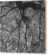 Tabebuia Tree 1 Wood Print