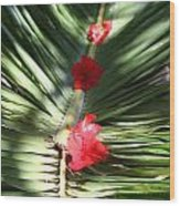 Tabyana Beach Honduras Wood Print