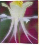 Tadpole Flower Wood Print