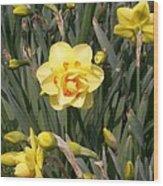 Tahiti Double Daffodil Wood Print