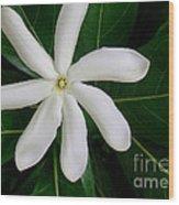 Tahitian Gardenia Wood Print