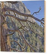 Tahquitz And The Pine Wood Print