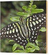 Tailed Jay Wood Print