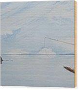 Tailing Redfish Wood Print