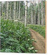 Take The High Road Wood Print