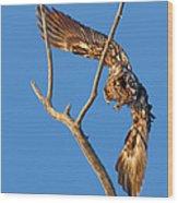 Taking Flight - Immature Bald Eagle Wood Print