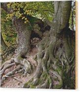 Taking Root Wood Print