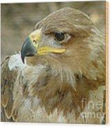 Tawny Eagle-11 Wood Print