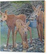 Talkeetna River Trio Wood Print