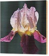Tall Bearded Iris Named Indian Chief Wood Print