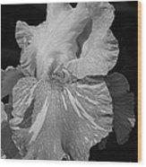 Tall Bearded Iris Named Saharan Sun Wood Print