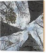 Tall Birches Wood Print
