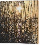 Tall Grass 1 Wood Print