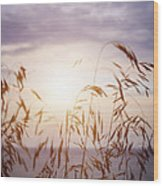Tall Grass At Sunset Wood Print
