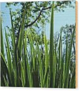 Tall Grass Wood Print