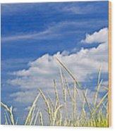 Tall Grass On Sand Dunes Wood Print by Elena Elisseeva