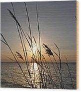Tall Grass Sunset Wood Print