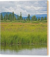 Tall Grasses In Swan Lake In Grand Teton National Park-wyoming Wood Print