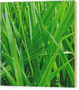 Tall Green Grass Wood Print