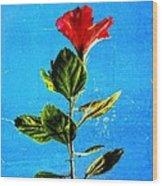 Tall Hibiscus - Flower Art By Sharon Cummings Wood Print