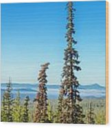 Tall Pine Trees And Hilly Background Wood Print
