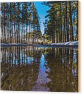 Tall Pines Wood Print