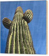 Tall Saguaro Cactus Wood Print