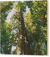 Tall Tall Trees Wood Print