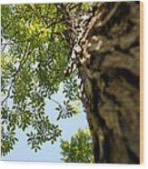 Tall Tree Wood Print by Stephanie Grooms