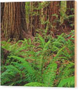 Tall Trees Grove Wood Print