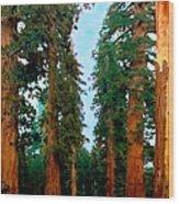 Tall Trees In Yosemite National Park Wood Print