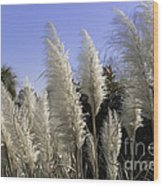 Tall Wispy Pampas Grass Wood Print
